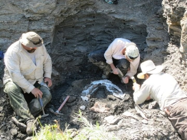 three men digging at a fossil site