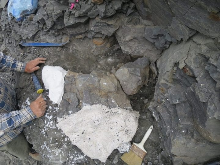 People digging around bones to uncover fossil