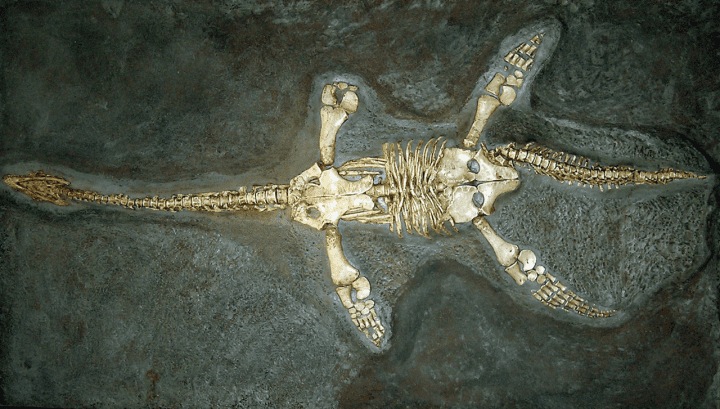 fossil burried in the dirt