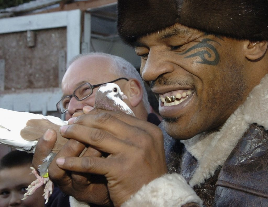 Mike Tyson loves pigeons