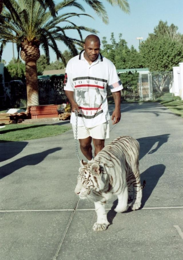 Mike Tyson once owned tigers