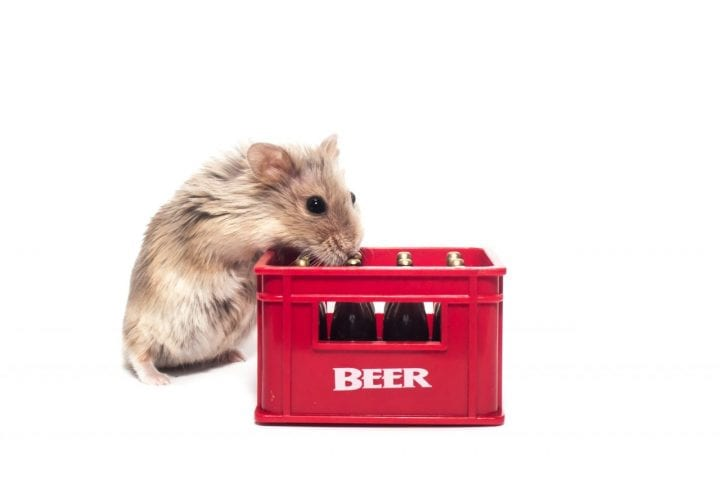 Hamster alcohol cute dark side animal