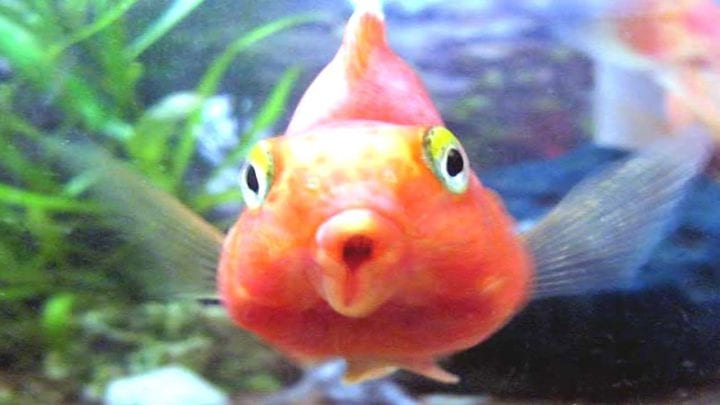 a fish with an open mouth doing fishy things