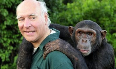 A baby chimp and her handler. The rescued chimp is being rehabilitated for release into the wild.
