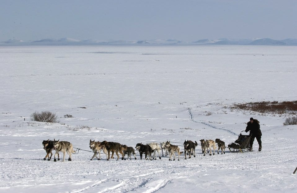 iditarod alaska dog racing