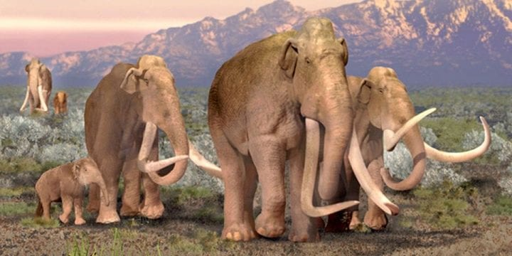 Columbian mammoth los angeles fossil discovery