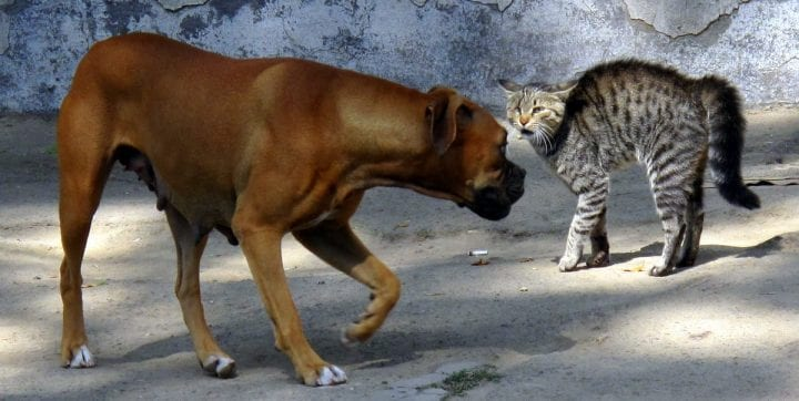 a dog and a cat face off to the death