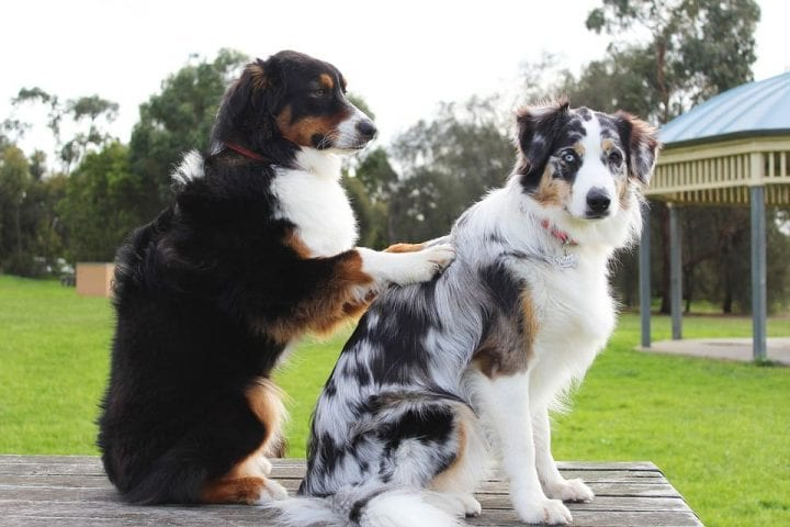 Dog scratching another dog's back