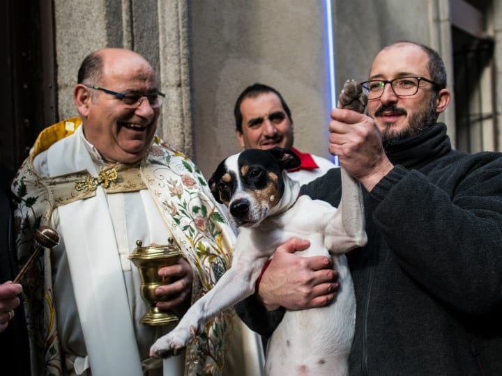 dog-being-blessed