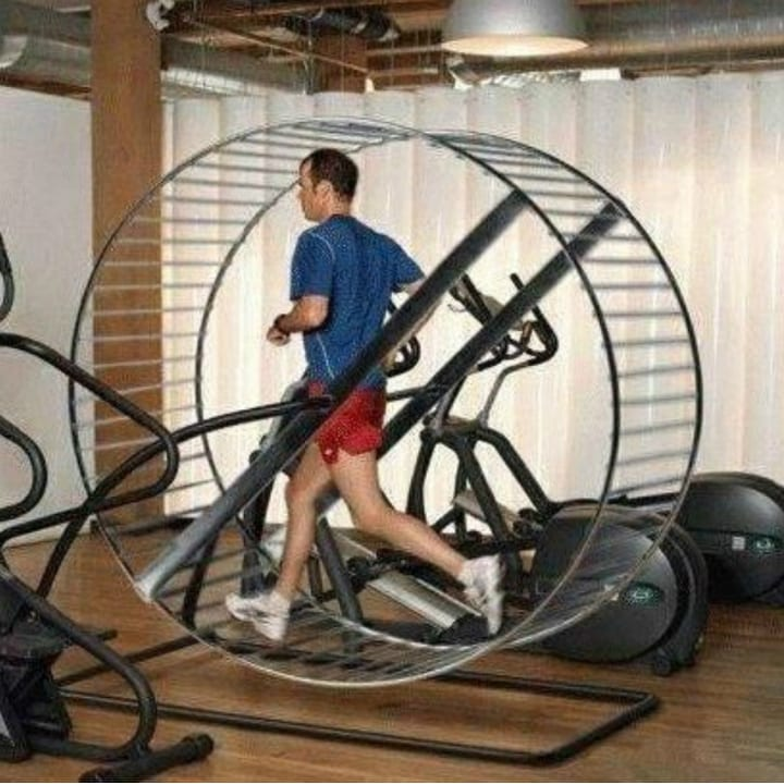 Funny gym photo hamster wheel