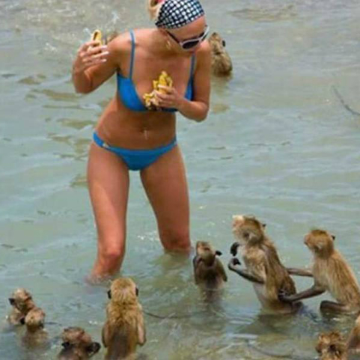 Monkeys beach
