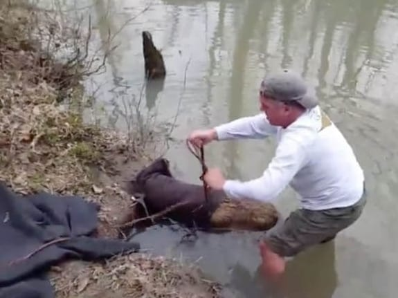 beaver rescue, saving a creature, wounded animal