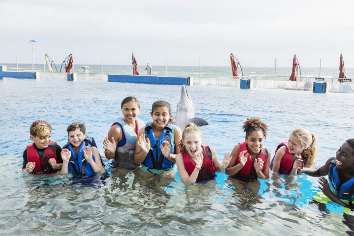 A multi-ethnic group of children and camp counselor on a field trip to a marine education park. They are standing waist deep in water wearing life jackets, ready to swim and explore sea life. A playful dolphin is swimming behind them.