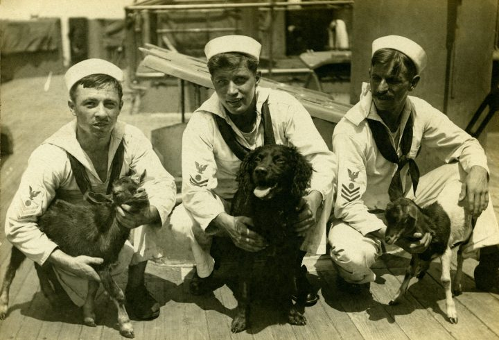 Sailors kneeling on ship's deck holding dog, and two small goats.