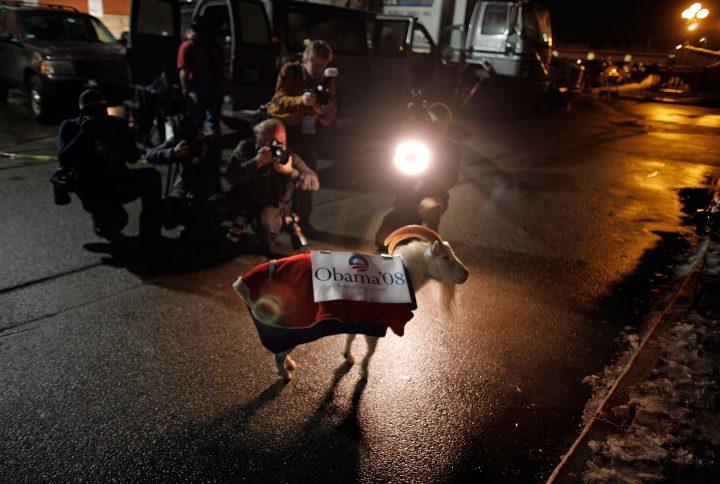 ROCHESTER, NH - JANUARY 7: Binxx, an 11-year-old goat, wears an Obama 08 campaign poster while being photographed by the press outside of a campaign rally for Democratic Presidential hopeful Sen. Barack Obama (D-IL) at the Rochester Opera House January 7, 2008 in Rochester, New Hampshire. Polls show Obama leading Sen. Hillary Clinton (D-NY) moving into Tuesday's New Hampshire primary. (Photo by Chip Somodevilla/Getty Images)