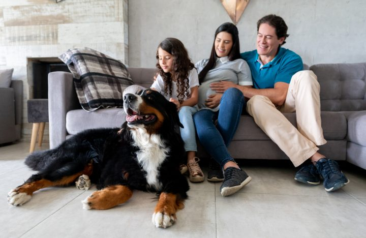 Beautiful dog at home with a happy Latin American pregnant family - lifestyle concepts