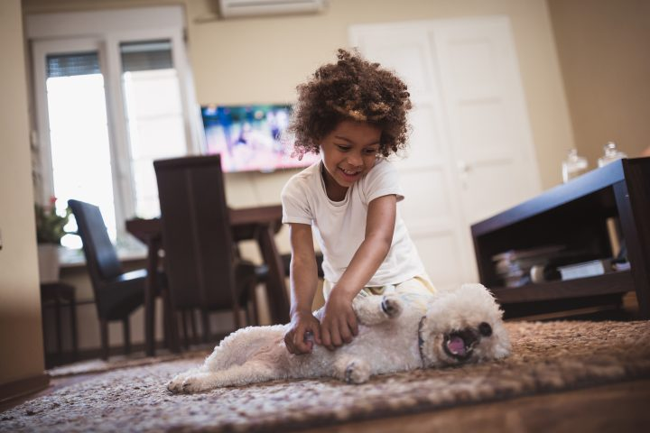 Cute, mixed race girl having fun indoors with her dog, bichon frise