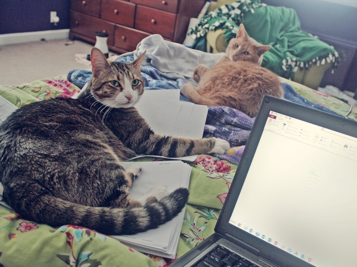 work from home, cats, staying home
